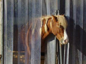 rideau a lanière et cheval